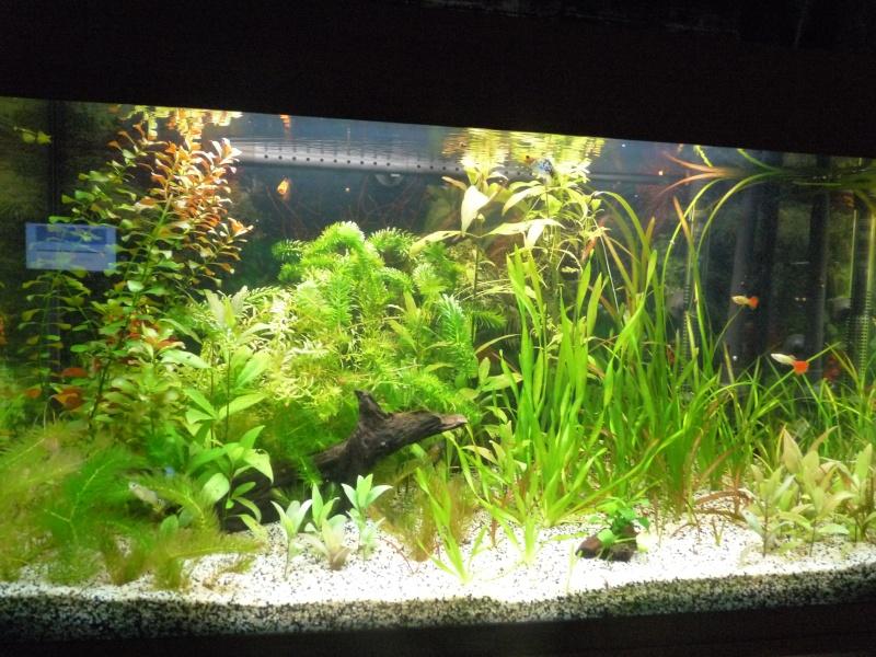 """Juwel Rio 125L """"Jungle Park"""" P1030813"""