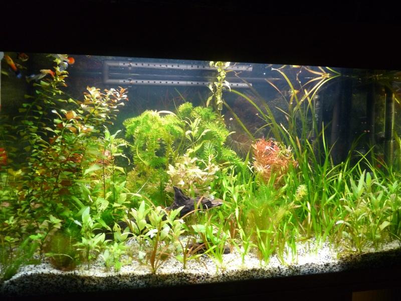 """Juwel Rio 125L """"Jungle Park"""" P1030829"""