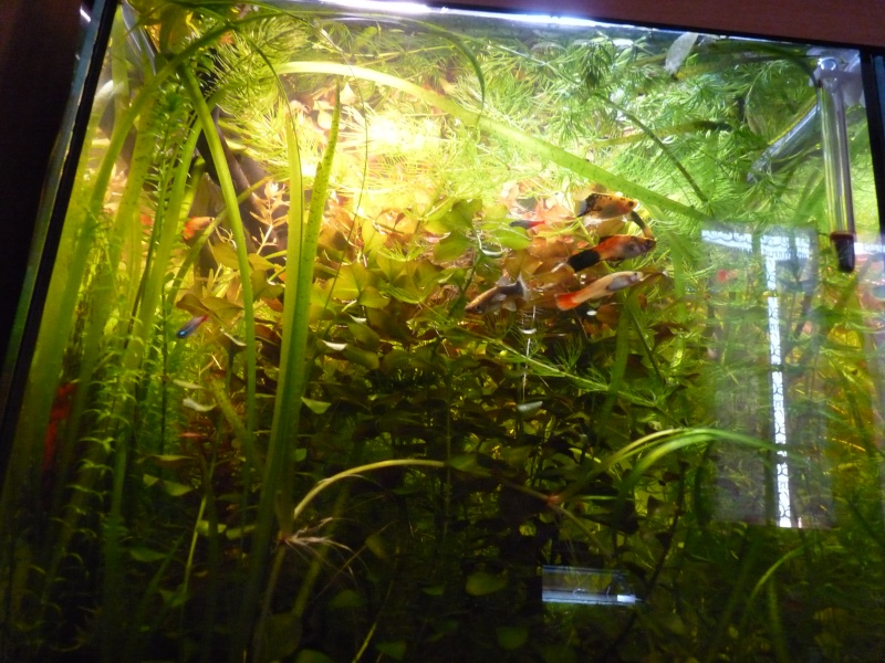 """Juwel Rio 125L """"Jungle Park"""" - Page 3 P1030937"""