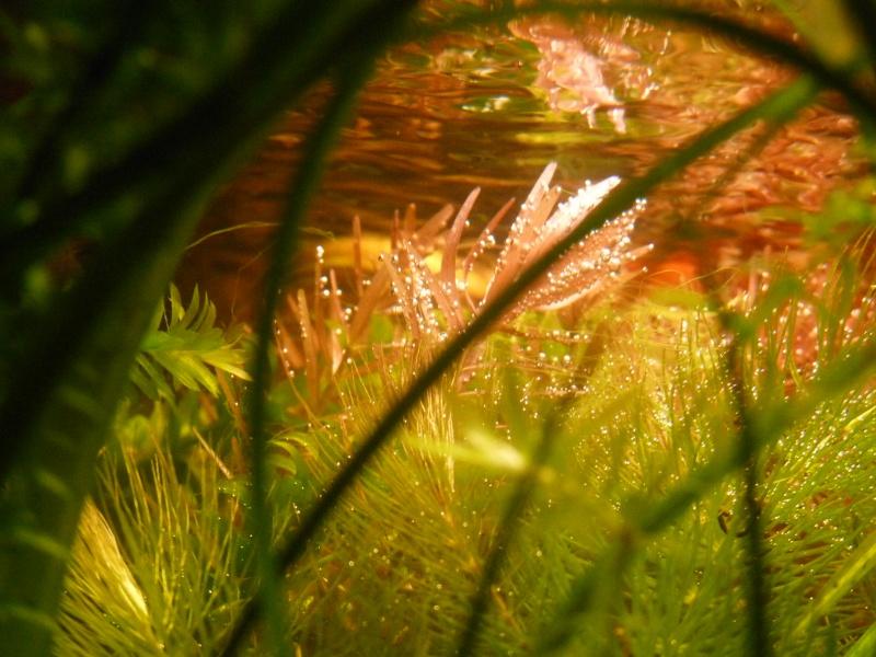 """Juwel Rio 125L """"Jungle Park"""" - Page 3 P1040013"""