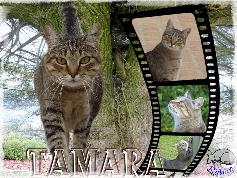 Mes petits délires Tamara10