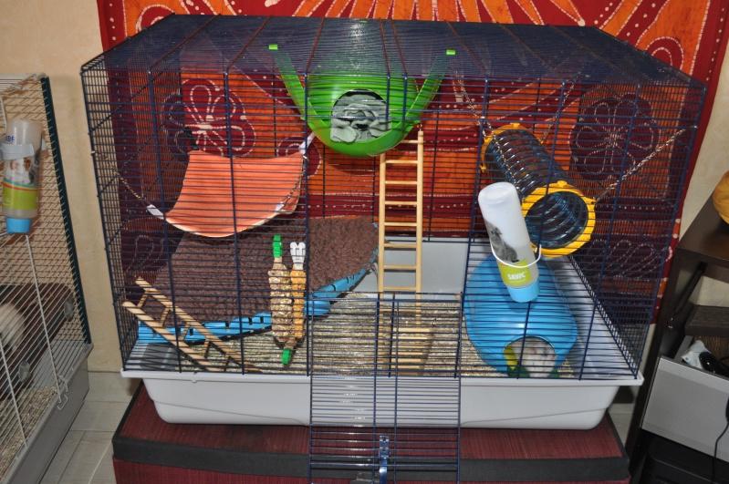 Cage trop petite Dsc_0013