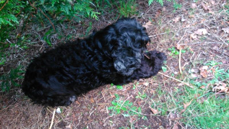 GINGLE, gentille cocker noire de 9 ans - Page 5 Dsc_0214