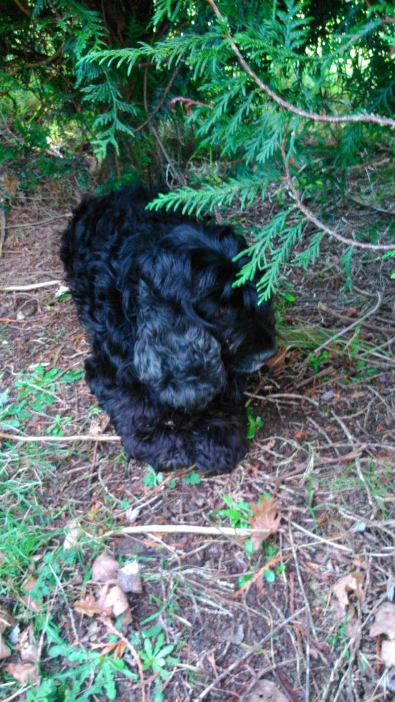 GINGLE, gentille cocker noire de 9 ans - Page 5 Dsc_0215