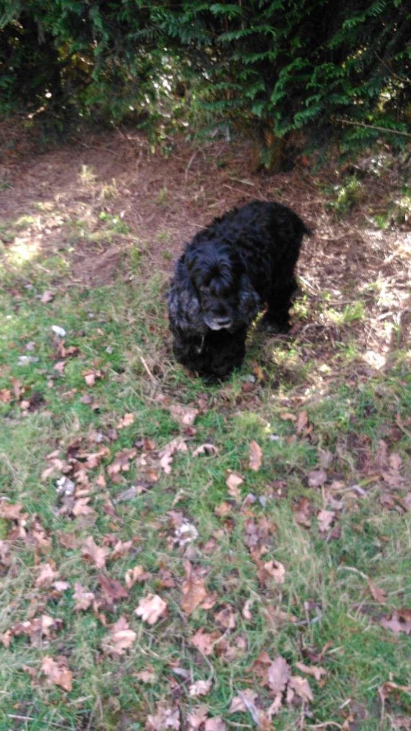 GINGLE, gentille cocker noire de 9 ans - Page 5 Dsc_0216