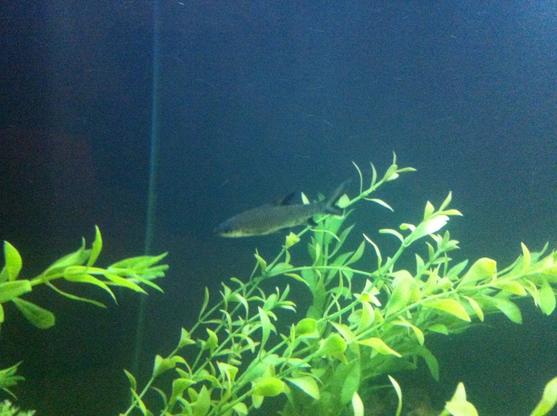 (BIG SALE) North America and south America and Malawi cichlid Img_1212