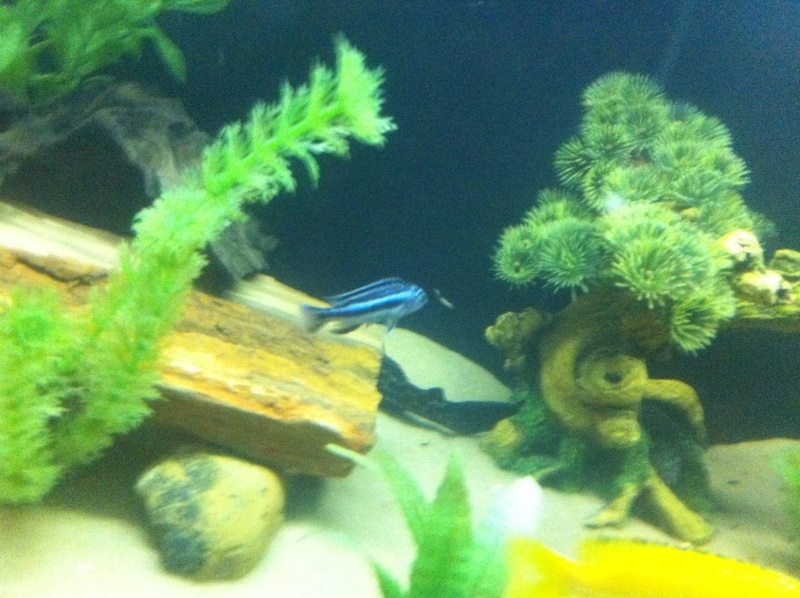(BIG SALE) North America and south America and Malawi cichlid Img_1220