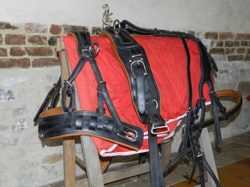 Harnais marathon cuir poney (61) Dscn7610