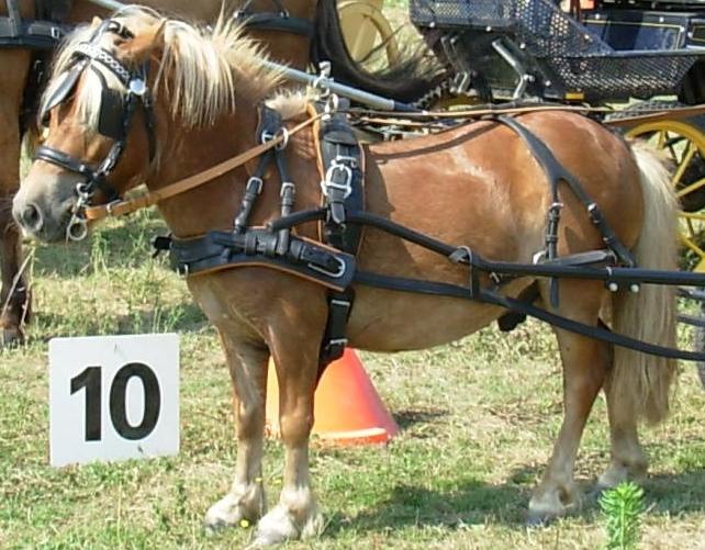 Harnais marathon cuir poney (61) Harnai10