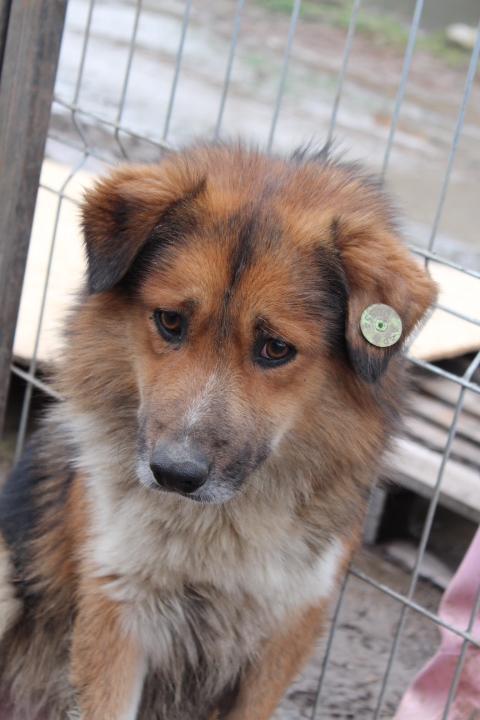 PASHA, M-X berger, né  2011 (Anda) - Pris en charge par Association Enfin le Bonheur Pa510