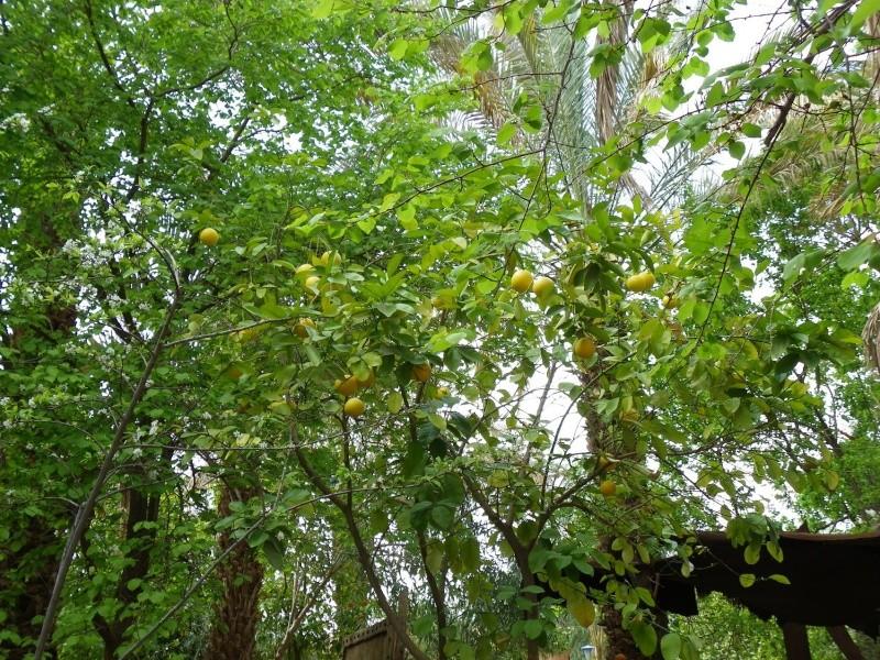 La palmeraie à Tansikht Img_2510