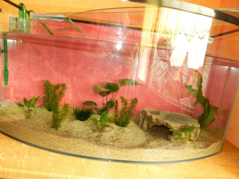 Mon Axolotl Dscn8814