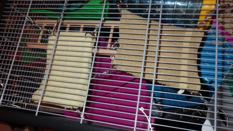 Recommandation construction maison : pacerelle + hamac + cachette Imgp0030