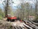 foto dal bosco, i nostri mezzi all'opera - Pagina 2 2014-013