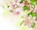 """Цветущая Смоковница с Молитвенными """"Плодами!"""" (статья для всех Христиан ХВЕ) 29-cve10"""