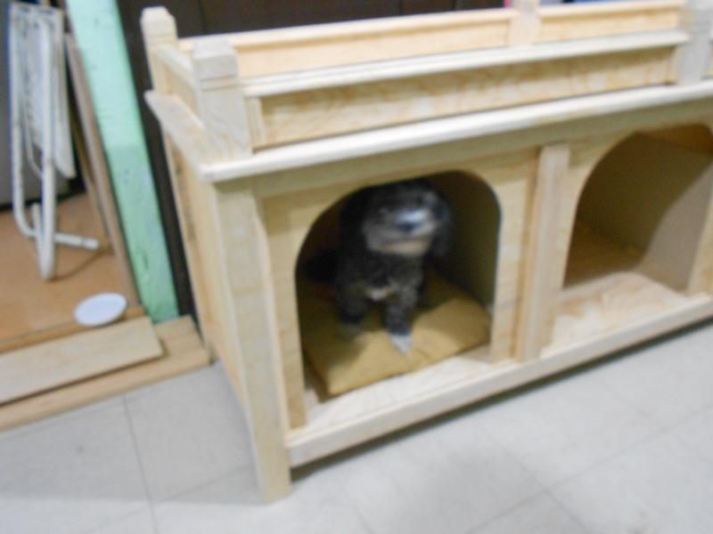 Casas y condominios para perros Qc6g10