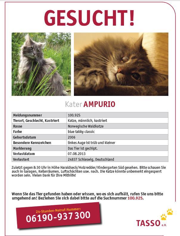 Norwegischer Waldkater immer noch in Schleswig gesucht Ampuri11