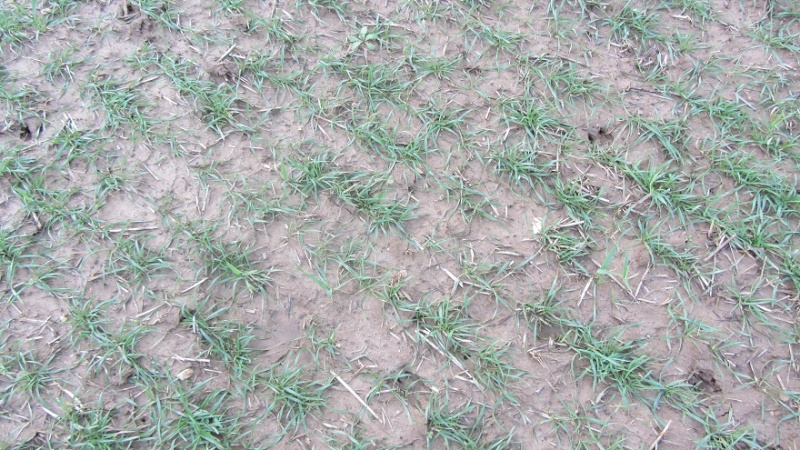 semis de blé 2013-2014 - Page 18 0213