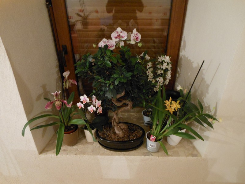Les orchidées de nounoucaro MAJ 08/05/14 - Page 2 Fenetr10