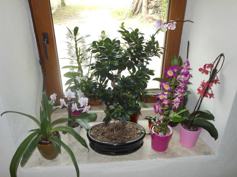 Les orchidées de nounoucaro MAJ 08/05/14 - Page 3 Fenetr11