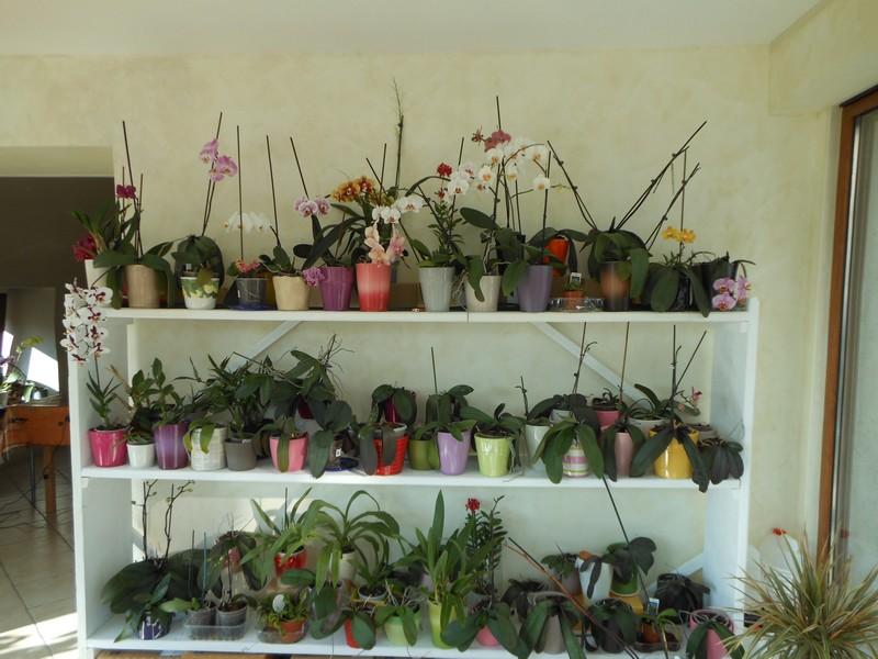 Les orchidées de nounoucaro MAJ 08/05/14 - Page 5 Verand12