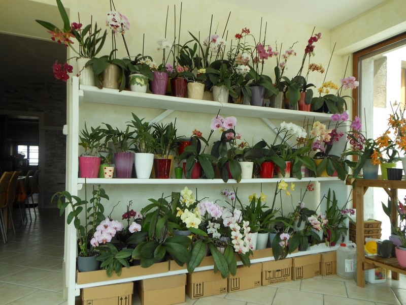Les orchidées de nounoucaro MAJ 08/05/14 - Page 3 Verand13