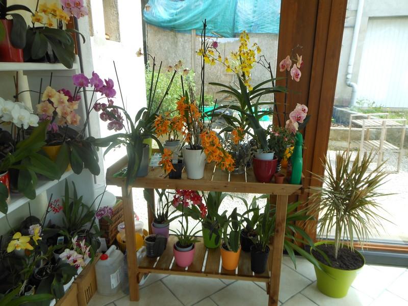 Les orchidées de nounoucaro MAJ 08/05/14 - Page 3 Verand15