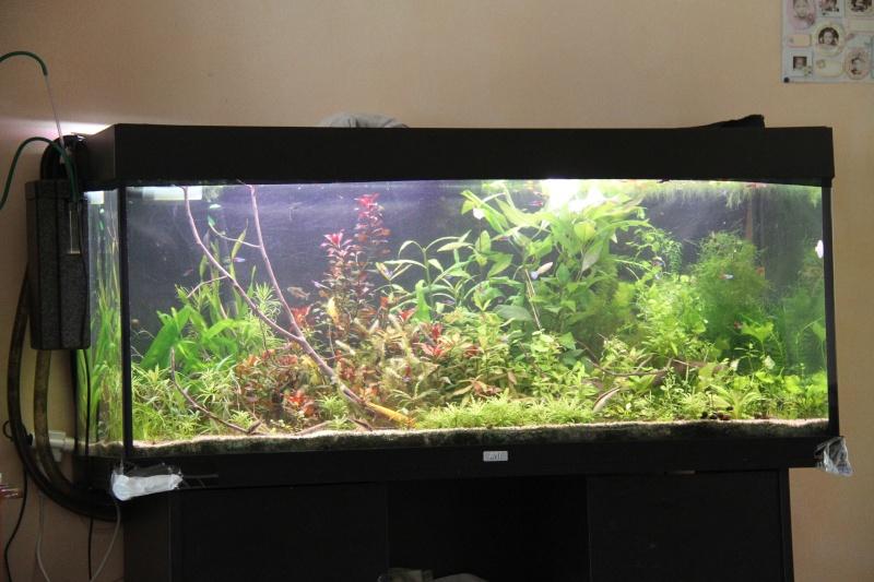 Présentation de mon aquarium (240L) Img_6410