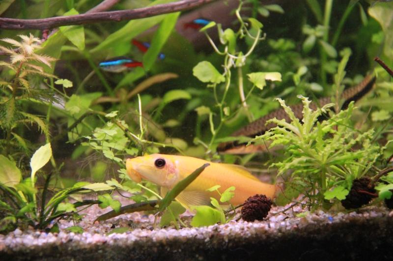 Présentation de mon aquarium (240L) Img_6419