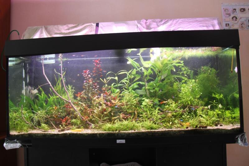 Présentation de mon aquarium (240L) Img_6426