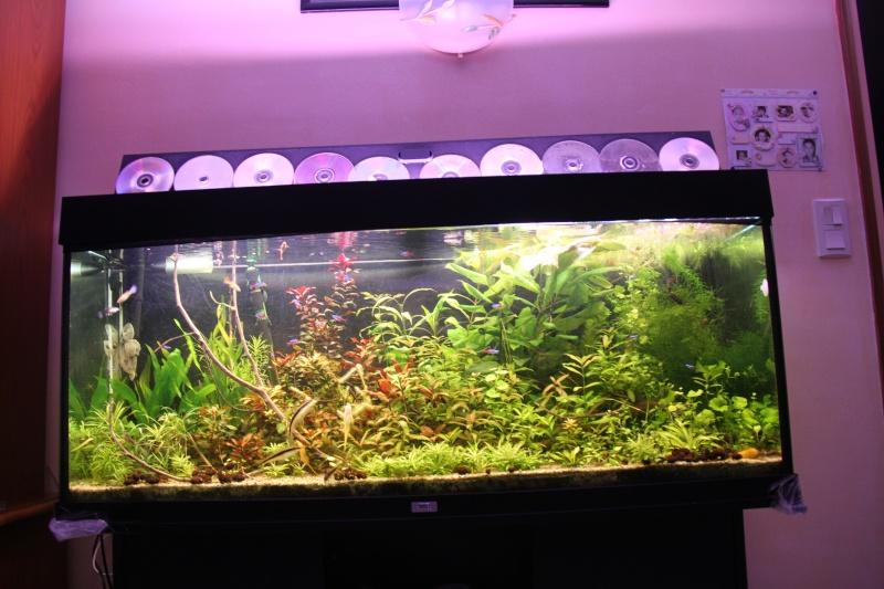 Présentation de mon aquarium (240L) Img_6513
