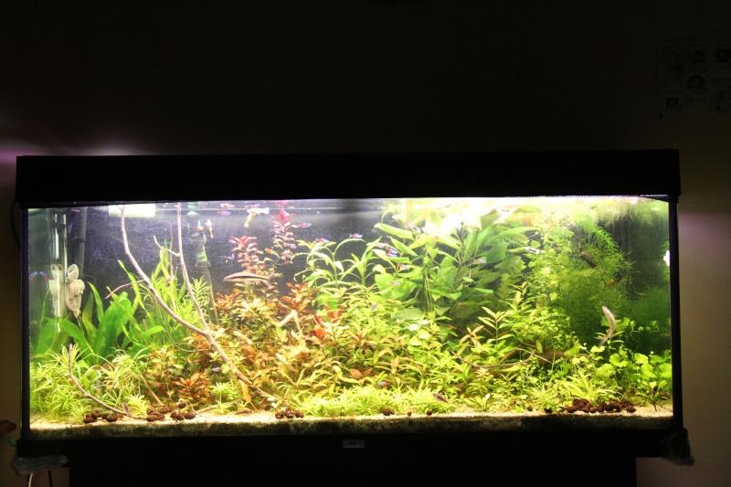 Présentation de mon aquarium (240L) Img_6514