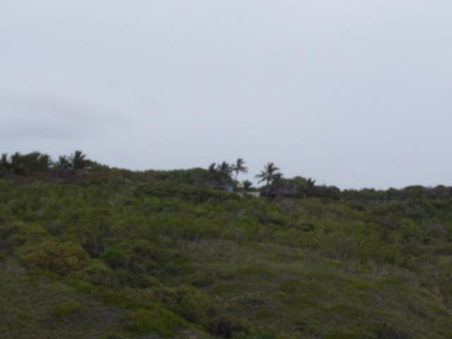 Tin Can Bay, Australia P1010910