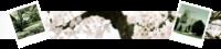 Silberkristall Sailor Treff - Portal Banner10