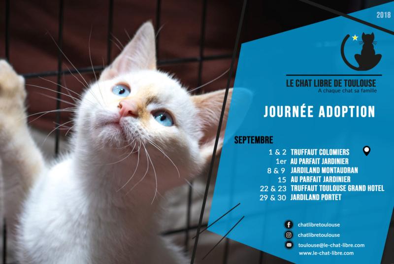 [ Adoptions ] 1 & 2 septembre 2018 : Truffaut Colomiers Journz13