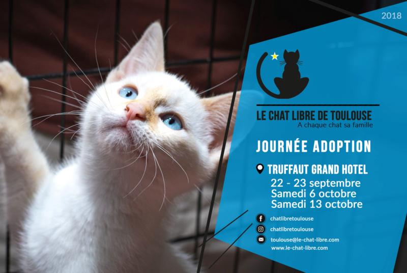 [ Adoptions ] samedi 13 octobre 2018 : Truffaut Grand Hotel  Journz19