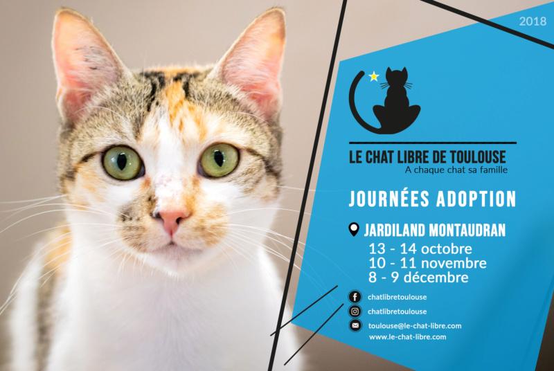 [ Adoptions ] samedi 10 & dimanche 11 novembre 2018 : Jardiland Montaudran Journz23