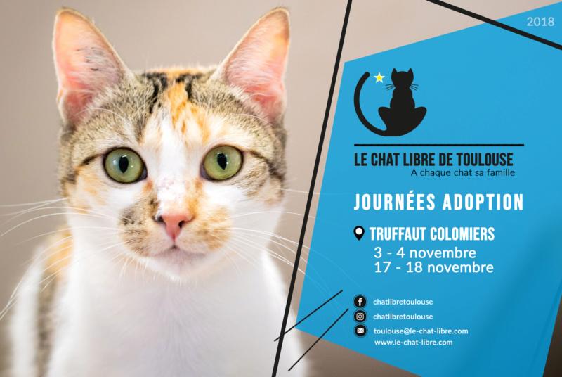 [ Adoptions ] Truffaut Colomiers 3 et 4 novembre 2018 Journz25