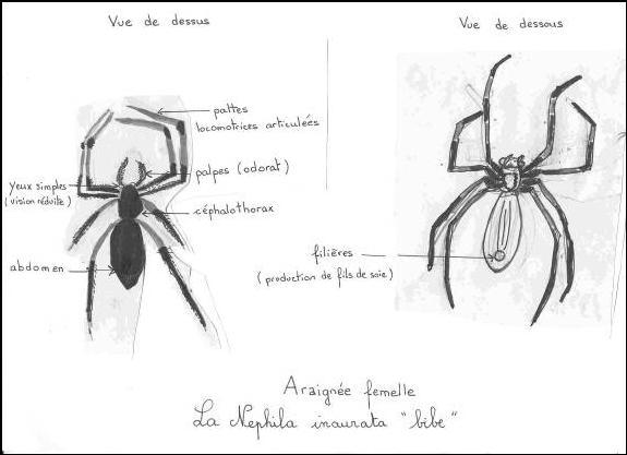 araignée dans saintpaulia Img00210