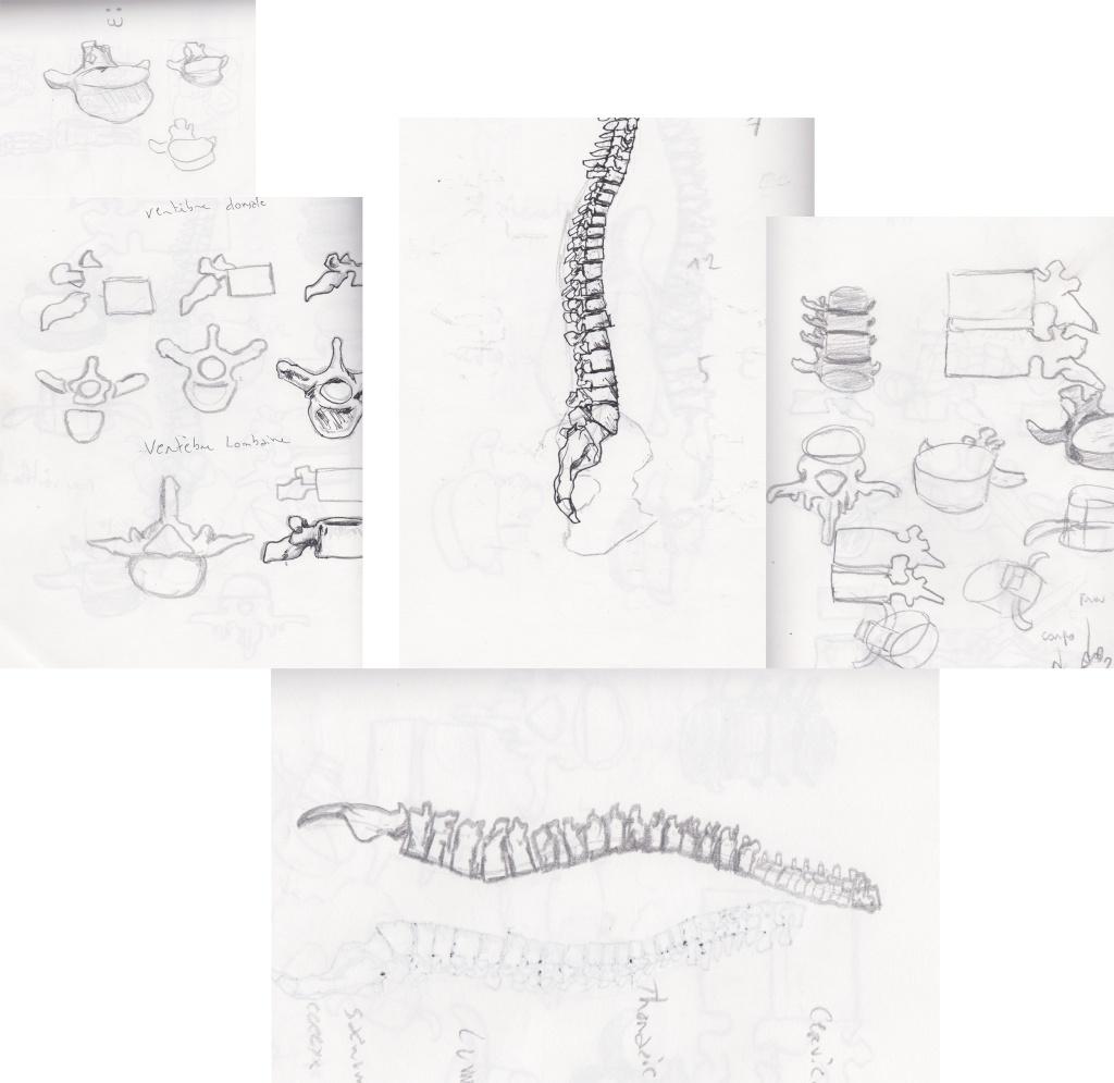 [defis] Lundi Anatomie Lundi110