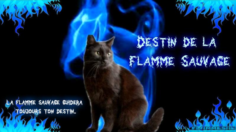 L'atelier de Destiny Destin10