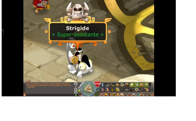 [Refusée] Candidature de Strigide Strigi11