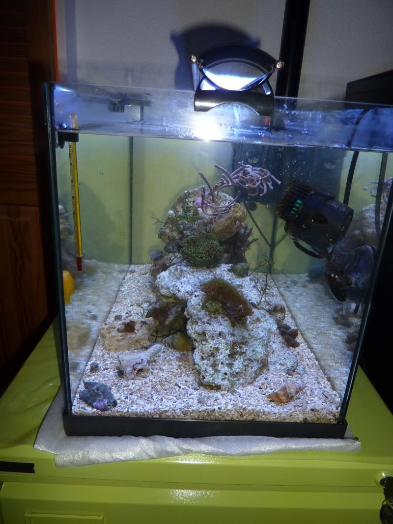 Choix de poissons pour Nano 60L P1110716