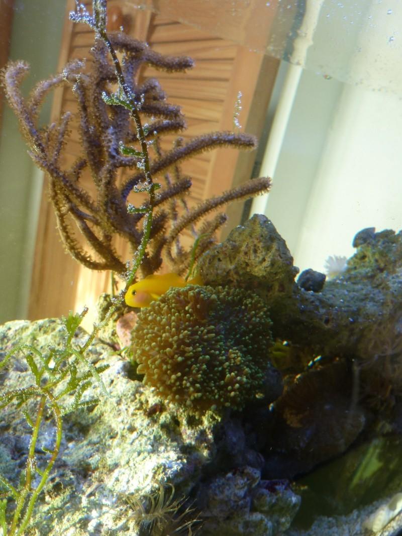 Choix de poissons pour Nano 60L P1120114