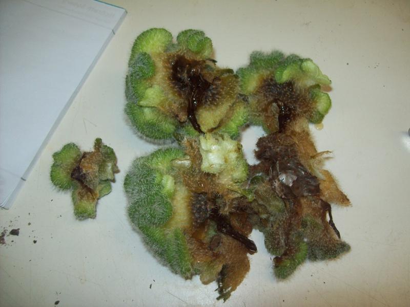 Rotten Cactus!!!! AHHHHH!!!! 101_2515
