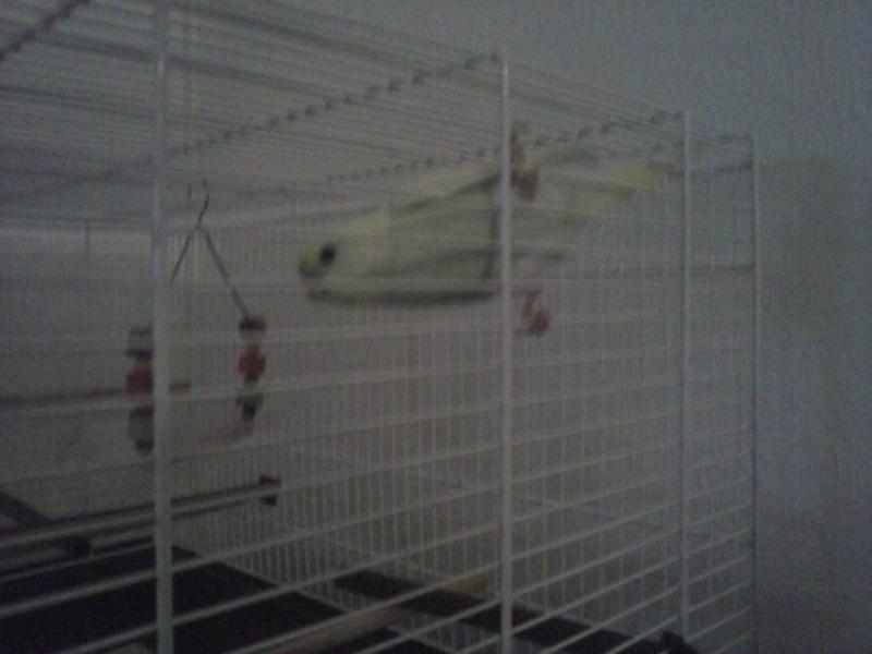 un couple ou un oiseau peut y rentrer? Cam00612