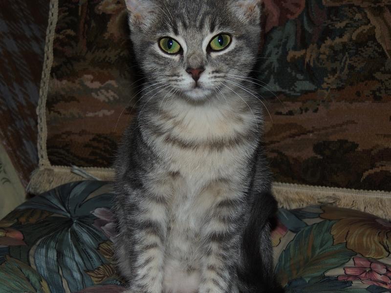 Baby - Adorable chatonne tigrée grise Dscn2310