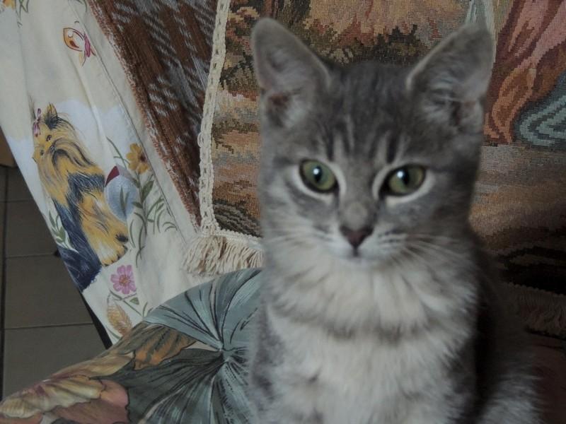 Baby - Adorable chatonne tigrée grise Dscn2311