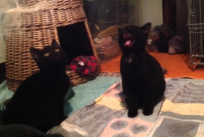 Yoko & Mya - Deux magnifiques panthères ! Image311