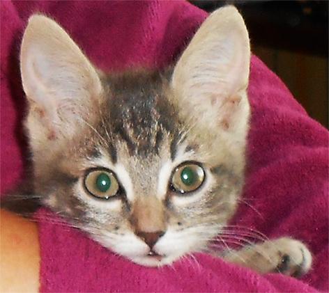 Loustique - Un amour de chatonne grise Sans_t11